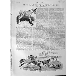1889 Race Horse Sport Jockey Lily Agnes Bend Or Ormonde