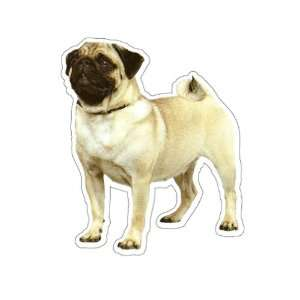 PUG   Dog Decal   sticker dogs car got window graphic
