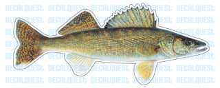 WALLEYE  Fish Decal  window sticker car truck fishing